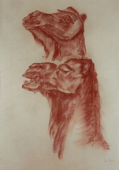 Two Dromedaries in Profile and Half Profile